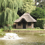 Ascott House lily pond, August 2013
